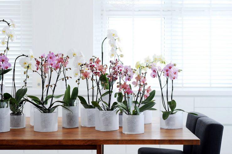 Орхидея по фэн-шуй