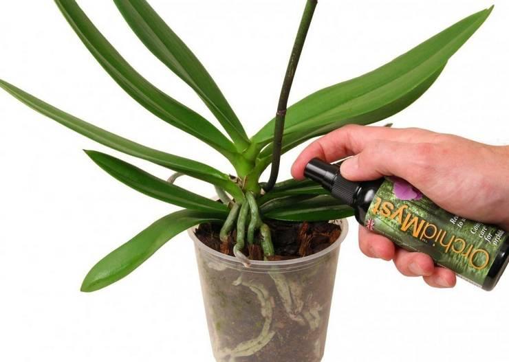 Подкормка домашней орхидеи