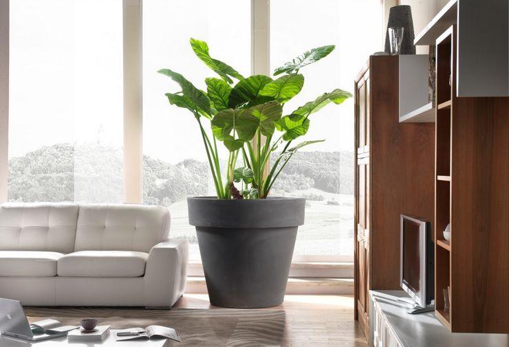 Одиночные растения в интерьере