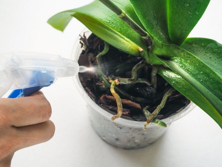 Польза и вред янтарной кислоты для орхидеи
