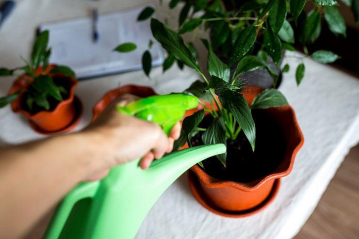 Методы обработки растений актарой