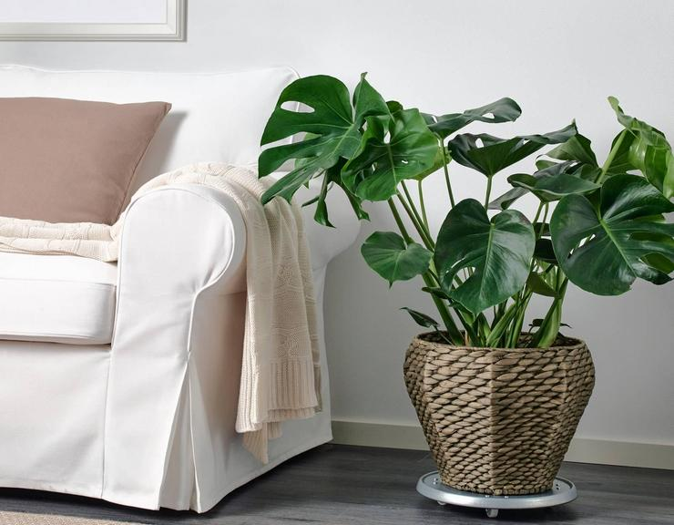Виды напольных растений