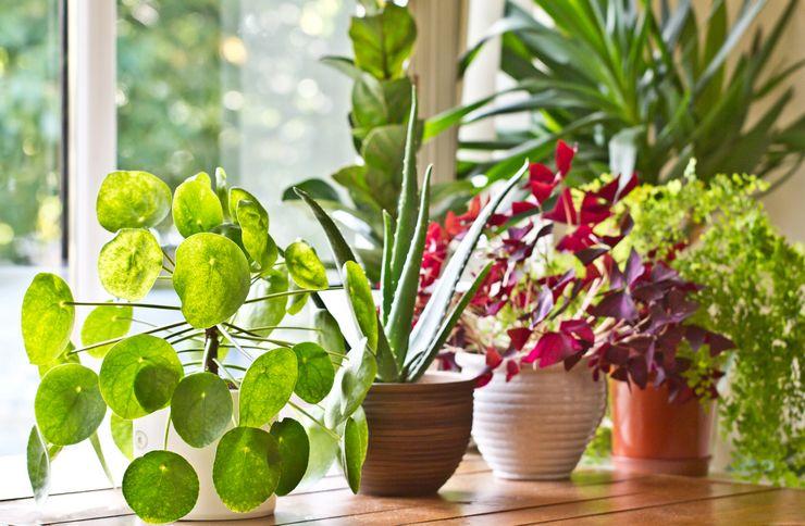 Растения с декоративной листвой