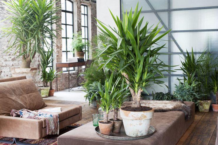 Пальмы и крупномеры